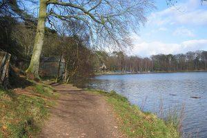 Talkin Tarn - dog walks in Cumbria