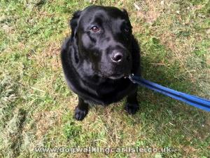 about Dog Walking in Carlisle